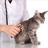Ветеринарные клиники в Гирвасе